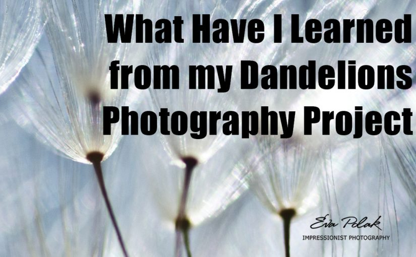 What Have I Learned from my Dandelions Photography Project