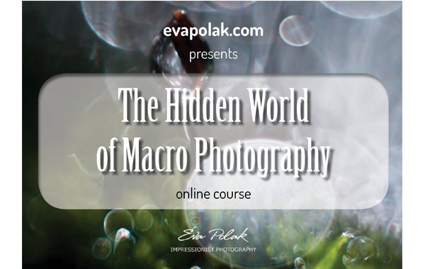 Macro Photography online course by Eva Polak