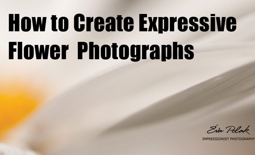 How to Create Expressive Flower Photographs