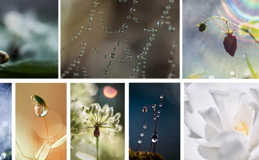 THE ART OF CREATIVE MACRO PHOTOGRAPHY