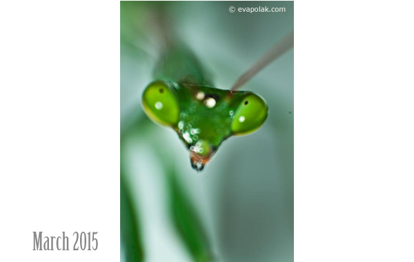 Photo of the Month March 2015