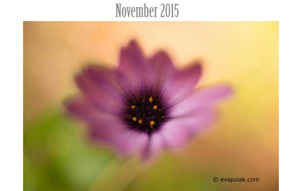Photo of the Month November 2015
