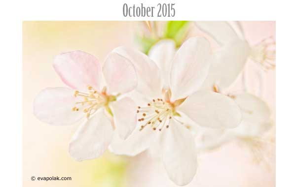 Photo of the Month October 2015