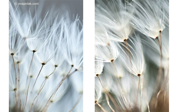 impression of dandelions, abstract