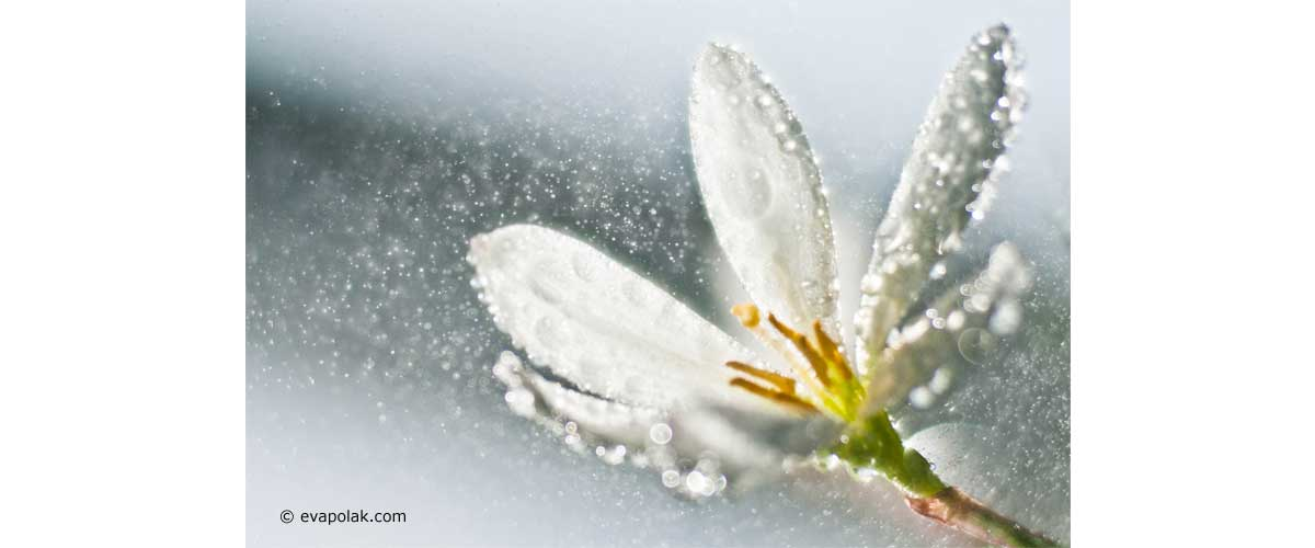 abstract image of a white flower and rain