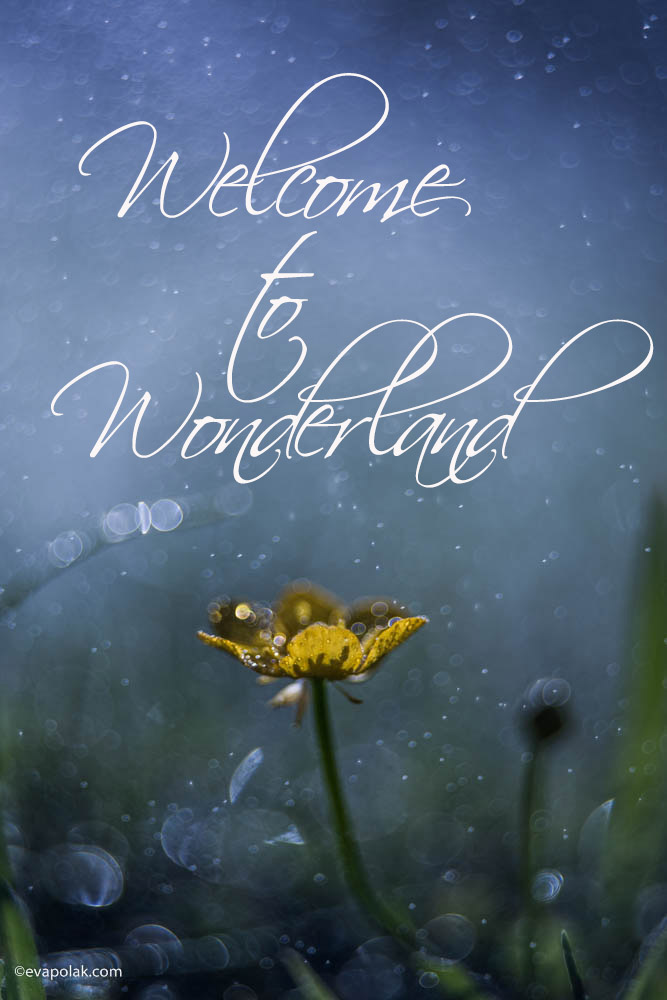 welcome to wonderland by eva polak