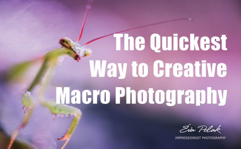 The Quickest Way to Creative Macro Photography