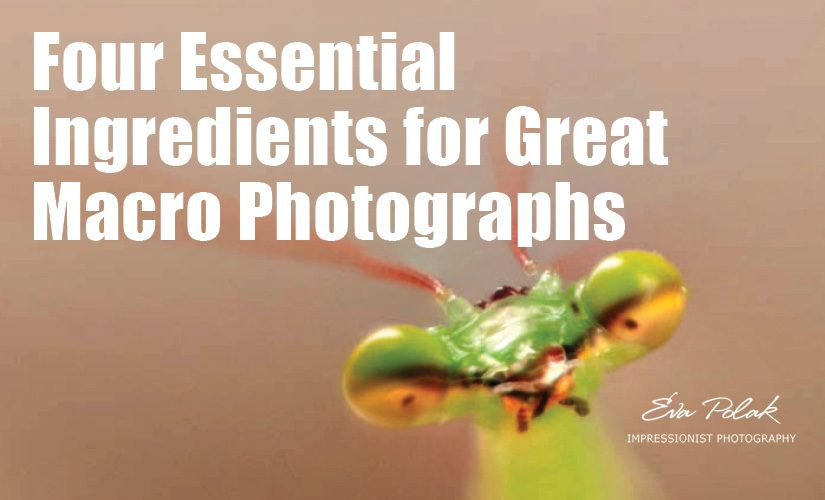 Four Essential Ingredients for Great Macro Photographs