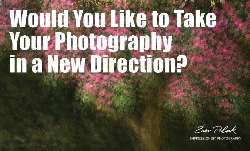 Would You Like to Take Your Photography in a New Direction?