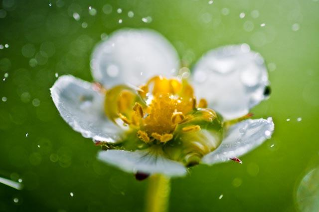 white flower by eva polak