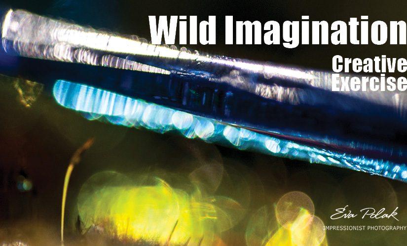 Wild Imagination