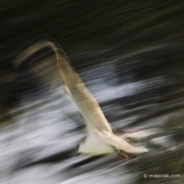 seagull by eva polak