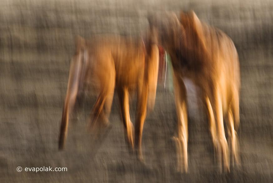 dogs by Eva Polak