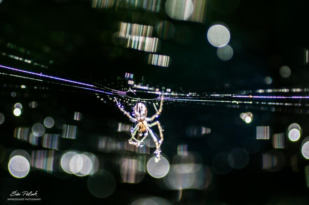 spider by Eva Polak