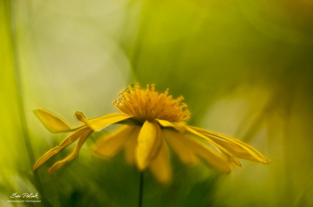 yellow by Eva Polak